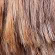 Light brown hair texture - Lizenzfreies Foto