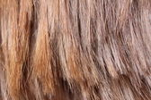Light brown hair texture — Stockfoto