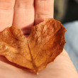 Leaf heart - Zdjcie stockowe