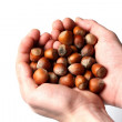 Stock Photo: Handfull of hazelnuts
