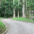 Car road in forest — Stock Photo