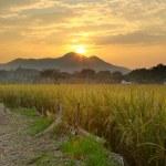 Golden sunset over farm field — Stock Photo