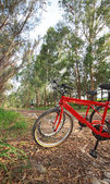 フォレスト内のバイク — ストック写真