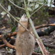 Prairie Dog — Stockfoto