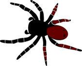 Vector image spider — Stock Vector