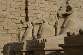 Sphinxes at Cairo — Stock Photo