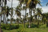 桑给巴尔岛森林 — 图库照片