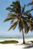 Занзибарский пляж — Стоковое фото