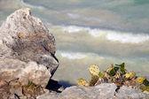 Tulum beach — Stock Photo