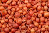 洋葱种子 — 图库照片