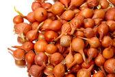 Heap onion seeds — Stock Photo
