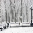 Winter at park — Stock Photo #8391881