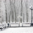 Winter at the park — Stock Photo