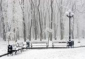Kış parkı — Stok fotoğraf