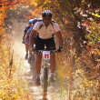 Stock Photo: Mountain bike competition in autumn forest