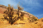 Desert mountains in Kazakhstan — Stockfoto
