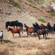 Group of horses in mountains — Stock Photo