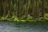Lago monti tien-shan, kazakistan — Foto Stock
