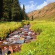 Small creek in a mountain valley — Stock Photo