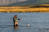 Fly fishing in Mongolia — Stok fotoğraf