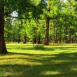 Pine forest — Stock Photo #9142733