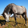 Stock Photo: Fun gray horse