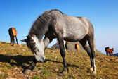 Fun gray horse — Stock Photo