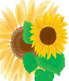 背景。美丽的明亮向日葵 — 图库矢量图片
