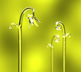 Photorealistic sprouts grow in spring — Stock Photo