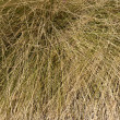 Desert Deer Grass — Stock Photo