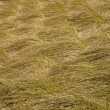 Stock Photo: Grass Textures