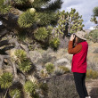Joshua Tree and Photographer - Stock Photo