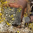 Rusty Vintage Truck in Flower Patch - Stock Photo