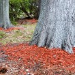 Redwood Mulch Ring — Stock Photo