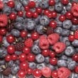 Berry fruit — Stock Photo