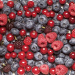 Berry fruit — Stock Photo #8793584