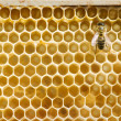 Stock Photo: Honeybee on comb