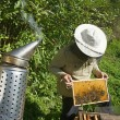 Stock Photo: Beekeeper holding honeycomb