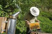 Beekeeper holding a honeycomb — Stock Photo