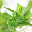 Fresh herbs — Stock Photo #9664473