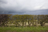 Stormy hedgerow background — Stock Photo