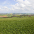 Stock Photo: Arable fieldscape in springtime
