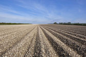 Chalky arable landscape — Stock Photo