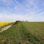 Springtime arable landscape — Stock Photo
