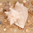 Large seashell on the sand — Stock Photo