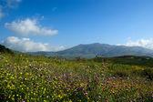 Mountain valley - landscape, island Sicily, Italy — Stock Photo
