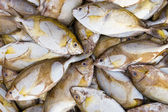 A pile of small fishes on a counter — Stock Photo