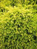 Verdi per sempre — Foto Stock