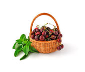 Basket with fresh cherries and mint — Stock Photo