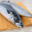 Fresh mackerel — Stock Photo
